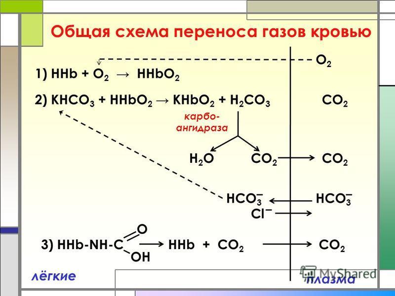 Общая схема переноса газов кровью плазма лёгкие 1) ННb + O 2 HHbO 2 2) KНCO 3 + HHbO 2 KHbO 2 + Н 2 CO 3 O2O2 CO 2 H2OH2O HCO 3 CO 2 Cl 3) HHb-NH-C HHb + CO 2 O OH CO 2 HCO 3 карбо- ангидраза