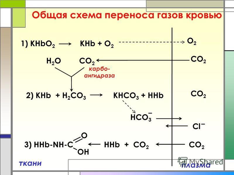 Общая схема переноса газов кровью плазма ткани 1) КHbO 2 КНb + O 2 2) KHb + Н 2 CO 3 KНCO 3 + HHb O2O2 CO 2 H2OH2O HCO 3 CO 2 Cl 3) HHb-NH-C HHb + CO 2 O OH CO 2 карбо- ангидраза
