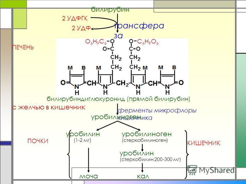 трансфера за билирубин 2 УДФГК 2 УДФ С6Н9О6С6Н9О6 О6Н9С6О6Н9С6 билирубиндиглюкуронид (прямой билирубин) ферменты микрофлоры кишечника уробилиноген уробилин уробилиноген (стеркобилиноген) (стеркобилин 200-300 мг) (1-2 мг) моча кал ПЕЧЕНЬ ПОЧКИ КИШЕЧНИ