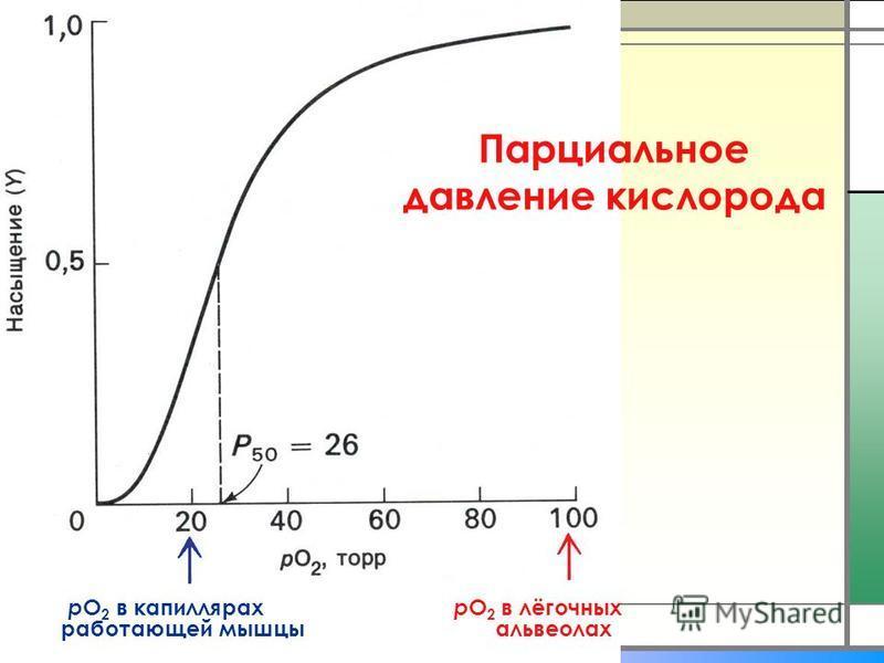 р О 2 в капиллярах р О 2 в лёгочных работающей мышцы альвеолах Парциальное давление кислорода