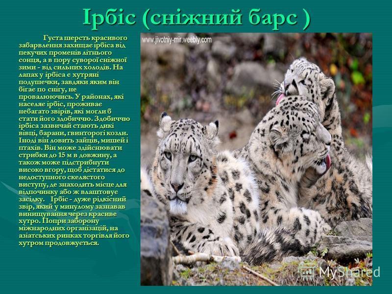 Гепард Гепард найшвидший звір на землі. На невеликій дистанції він може бігти зі швидкістю до 120 км за годину. Колись гепарди зустрічались майже по всій Африці, Передній Азії, Туркменії та Індії. Тепер вони уціліли лише в заповідниках. Гепарди полюю