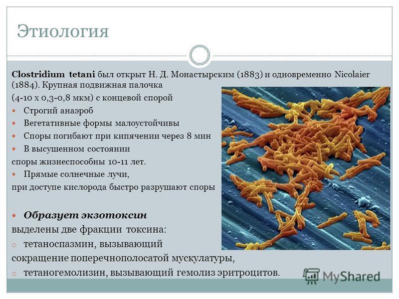 Этиология Clostridium tetani был открыт Н. Д. Монастырским (1883) и одновременно Nicolaier (1884). Крупная подвижная палочка (4-10 x 0,3-0,8 мкм) с концевой спорой Строгий анаэроб Вегетативные формы малоустойчивы Споры погибают при кипячении через 8