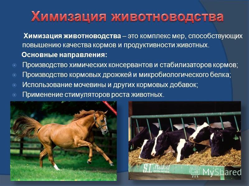 Химизация животноводства – это комплекс мер, способствующих повышению качества кормов и продуктивности животных. Основные направления: Производство химических консервантов и стабилизаторов кормов; Производство кормовых дрожжей и микробиологического б