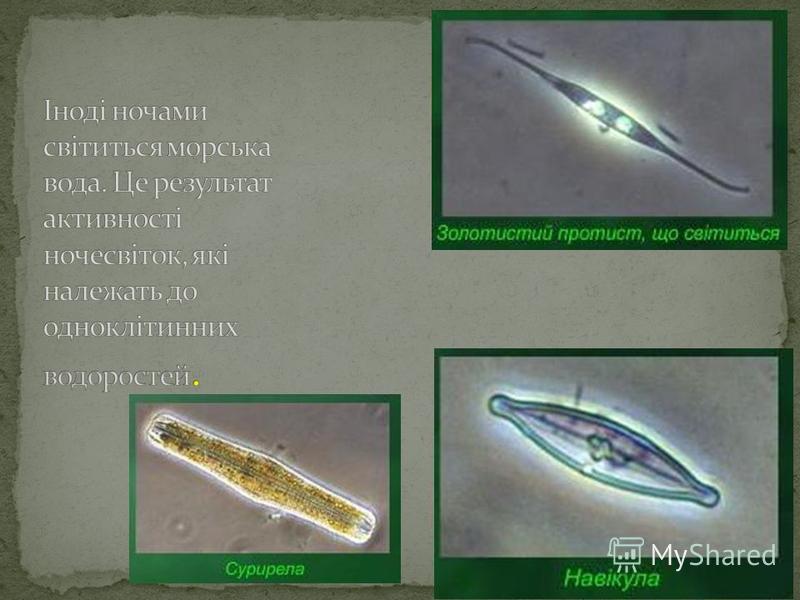 Одноклітинні водорослі Зелені водорослі Діатомові водорослі