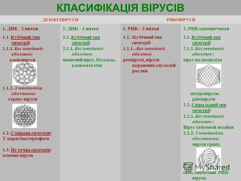 КЛАСИФІКАЦІЯ ВІРУСІВ ДЕЗОКСІВІРУСИРИБОВІРУСИ 1. ДНК - 2 нитки2. ДНК – 1 нитка1. РНК – 2 нитки2. РНК однонитчатая 1.1. Кубічний тип симетрії: 1.1.1. Без зовнішніх оболонок: аденовіруси 1.1.2. З зовнішніми оболчками: герпес-віруси 1.2. Смішана симетрія