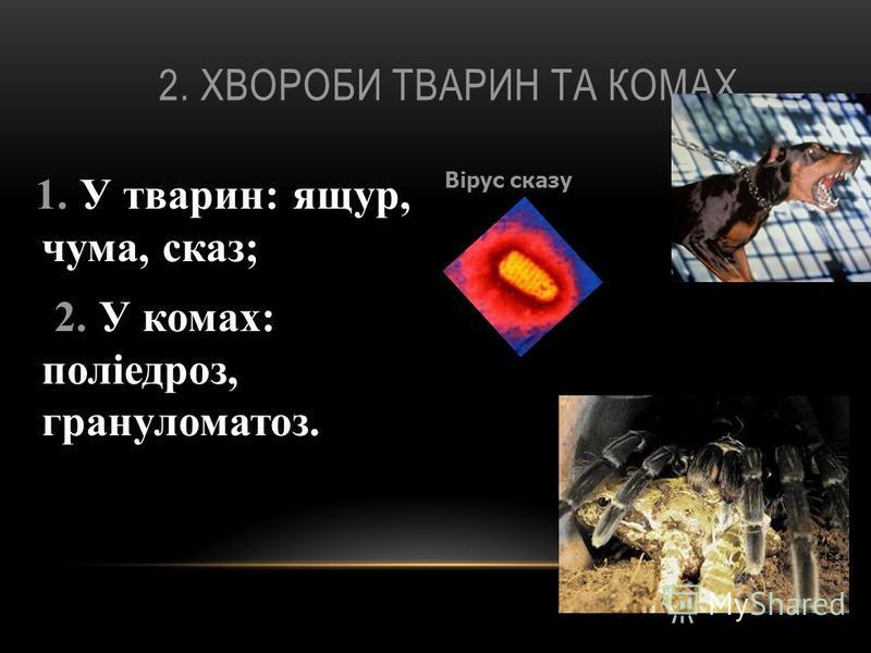 2. ХВОРОБИ ТВАРИН ТА КОМАХ 1. У тварин: ящур, чума, сказ; 2. У комах: поліедроз, грануломатоз. Вірус сказу