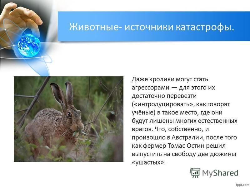 Даже кролики могут стать агрессорами для этого их достаточно перевезти («интродуцировать», как говорят учёные) в такое место, где они будут лишены многих естественных врагов. Что, собственно, и произошло в Австралии, после того как фермер Томас Остин