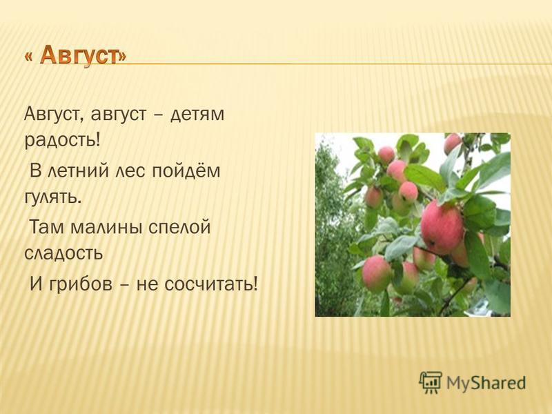 Август, август – детям радость! В летний лес пойдём гулять. Там малины спелой сладость И грибов – не сосчитать!