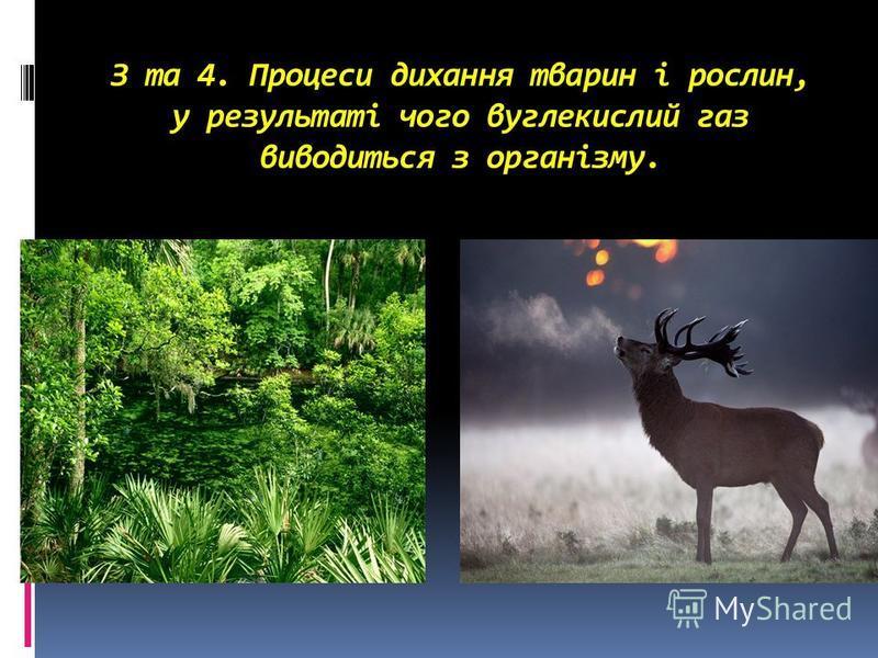 З та 4. Процеси дихання тварин і рослин, у результаті чого вуглекислий газ виводиться з організму.