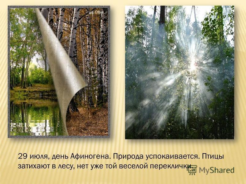 29 июля, день Афиногена. Природа успокаивается. Птицы затихают в лесу, нет уже той веселой переклички.
