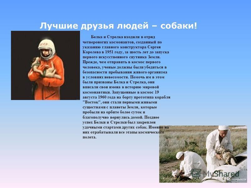 Белка и Стрелка входили в отряд четвероногих космонавтов, созданный по указанию главного конструктора Сергея Королева в 1951 году, за шесть лет до запуска первого искусственного спутника Земли. Прежде, чем отправить в космос первого человека, ученые