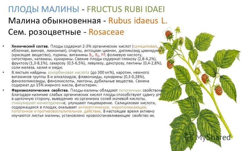 ПЛОДЫ МАЛИНЫ - FRUCTUS RUBI IDAEI Малина обыкновенная - Rubus idaeus L. Сем. розоцветные - Rosaceae Химический состав. Пплоды содержат 2-3% органических кислот (салициловая, яблочная, винная, лимонная), спирты, антоциан цианин, дигликозид цианидина (
