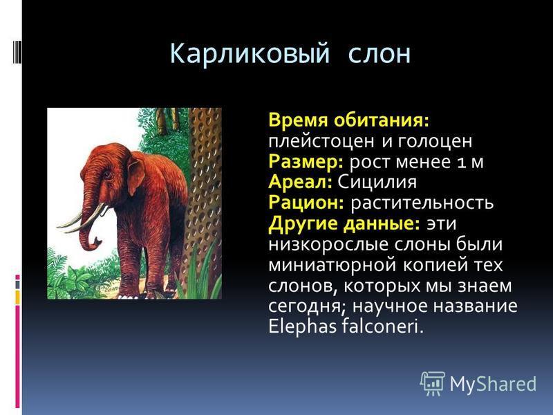 Карликовый слон Время обитания: плейстоцен и голоцен Размер: рост менее 1 м Ареал: Сицилия Рацион: растительность Другие данные: эти низкорослые слоны были миниатюрной копией тех слонов, которых мы знаем сегодня; научное название Elephas falconeri.