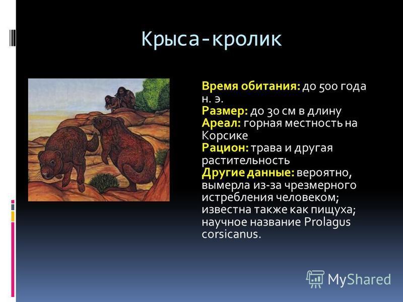 Крыса-кролик Время обитания: до 500 года н. э. Размер: до 30 см в длину Ареал: горная местность на Корсике Рацион: трава и другая растительность Другие данные: вероятно, вымерла из-за чрезмерного истребления человеком; известна также как пищуха; науч