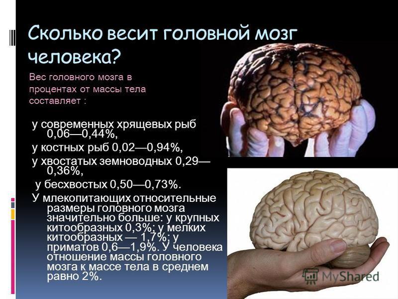 Сколько весит головной мозг человека? у современных хрящевых рыб 0,060,44%, у костных рыб 0,020,94%, у хвостатых земноводных 0,29 0,36%, у бесхвостых 0,500,73%. У млекопитающих относительные размеры головного мозга значительно больше: у крупных китоо