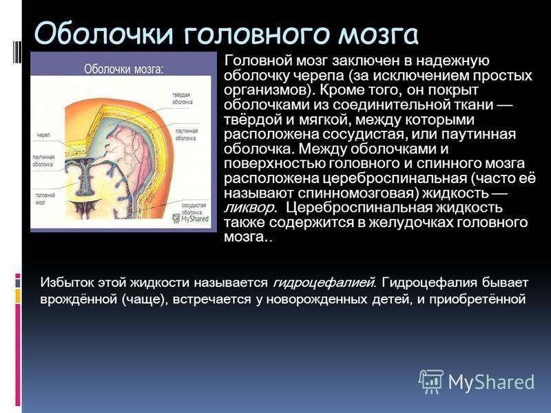 Oболочки головного мозга Головной мозг заключен в надежную оболочку черепа (за исключением простых организмов). Кроме того, он покрыт оболочками из соединительной ткани твёрдой и мягкой, между которыми расположена сосудистая, или паутинная оболочка.