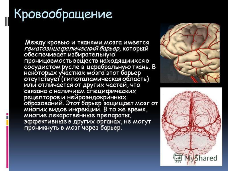 Кровообращение Между кровью и тканями мозга имеется гематоэнцефалический барьер, который обеспечивает избирательную проницаемость веществ находящихся в сосудистом русле в церебральную ткань. В некоторых участках мозга этот барьер отсутствует (гипотал