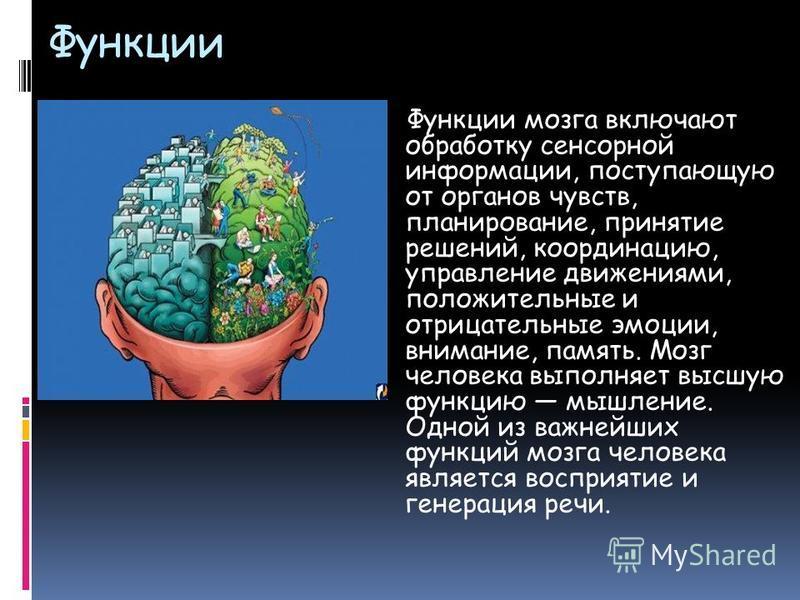 Функции Функции мозга включают обработку сенсорной информации, поступающую от органов чувств, планирование, принятие решений, координацию, управление движениями, положительные и отрицательные эмоции, внимание, память. Мозг человека выполняет высшую ф