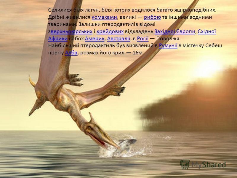 Високоспеціалізована група, що пристосувалася до життя в повітрі. Для птеродактилів характерний сильно видовжений легкийчереп. Зуби нечисленні і дрібні, частіше вони були відсутні. Шийні хребці витягнуті, без шийних ребер. Крила потужні широкі, літал