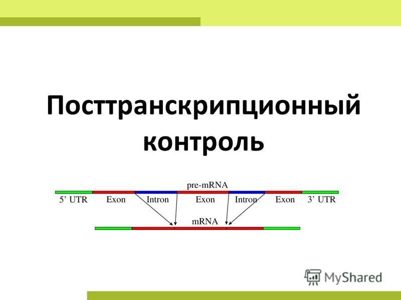 Посттранскрипционный контроль