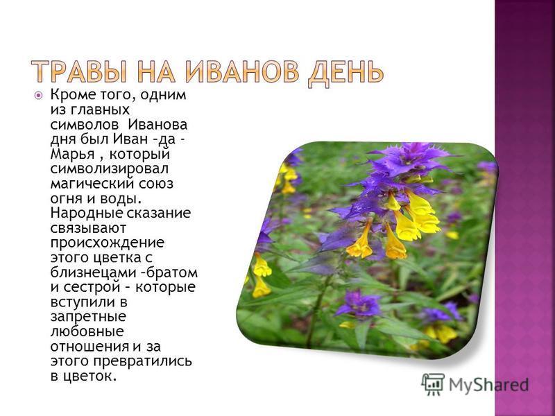 Кроме того, одним из главных символов Иванова дня был Иван –да - Марья, который символизировал магический союз огня и воды. Народные сказание связывают происхождение этого цветка с близнецами –братом и сестрой – которые вступили в запретные любовные