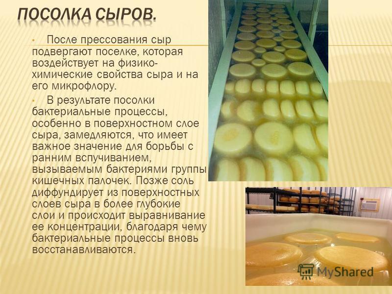 После прессования сыр подвергают поселке, которая воздействует на физико- химические свойства сыра и на его микрофлору. В результате посолки бактериальные процессы, особенно в поверхностном слое сыра, замедляются, что имеет важное значение для борьбы