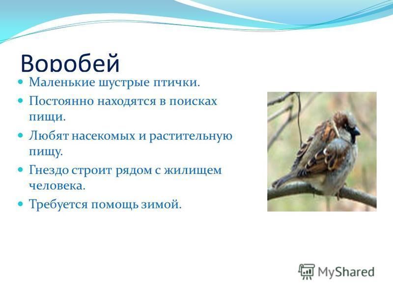 Воробей Маленькие шустрые птички. Постоянно находятся в поисках пищи. Любят насекомых и растительную пищу. Гнездо строит рядом с жилищем человека. Требуется помощь зимой.