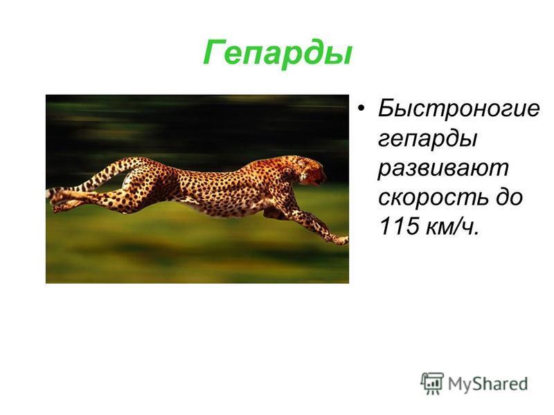 Гепарды Быстроногие гепарды развивают скорость до 115 км/ч.