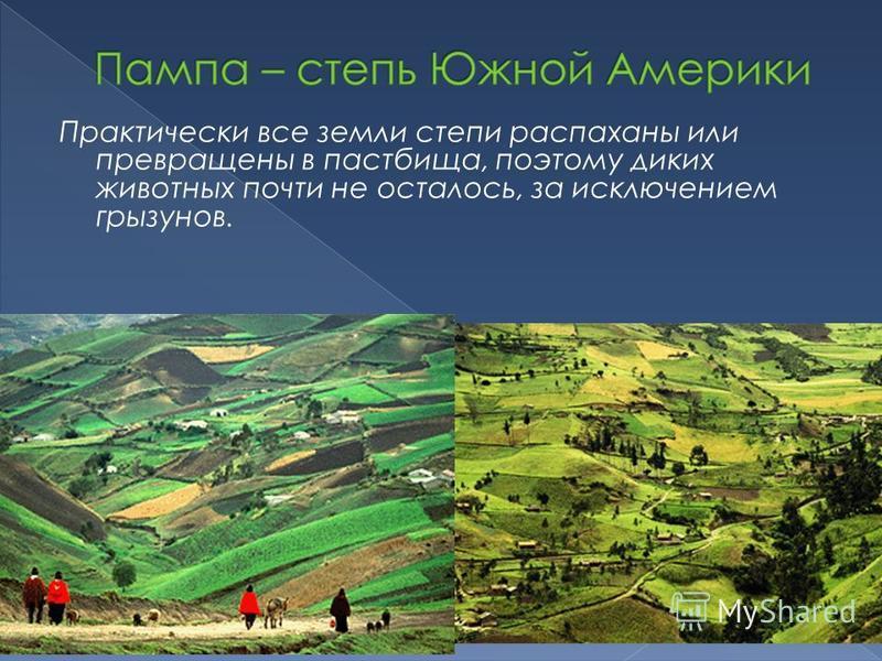 Практически все земли степи распаханы или превращены в пастбища, поэтому диких животных почти не осталось, за исключением грызунов.
