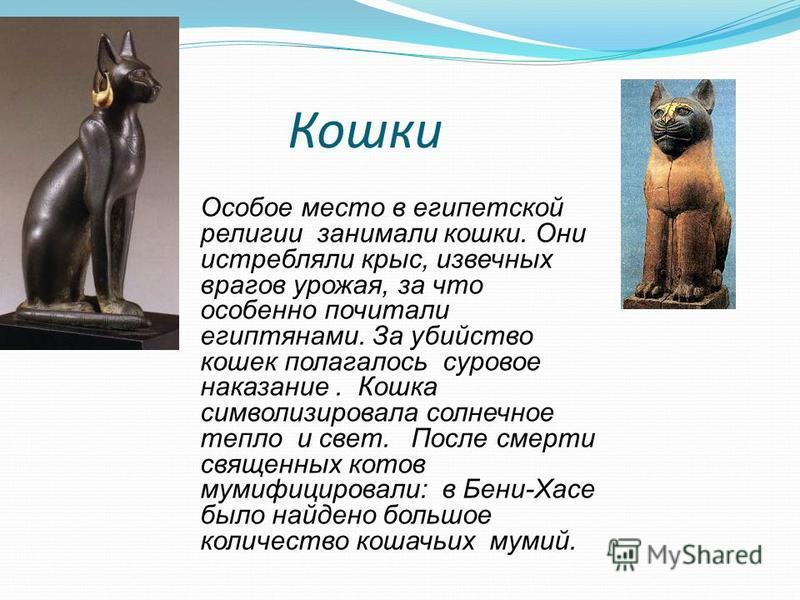 Кошки Особое место в египетской религии занимали кошки. Они истребляли крыс, извечных врагов урожая, за что особенно почитали египтянами. За убийство кошек полагалось суровое наказание. Кошка символизировала солнечное тепло и свет. После смерти свяще