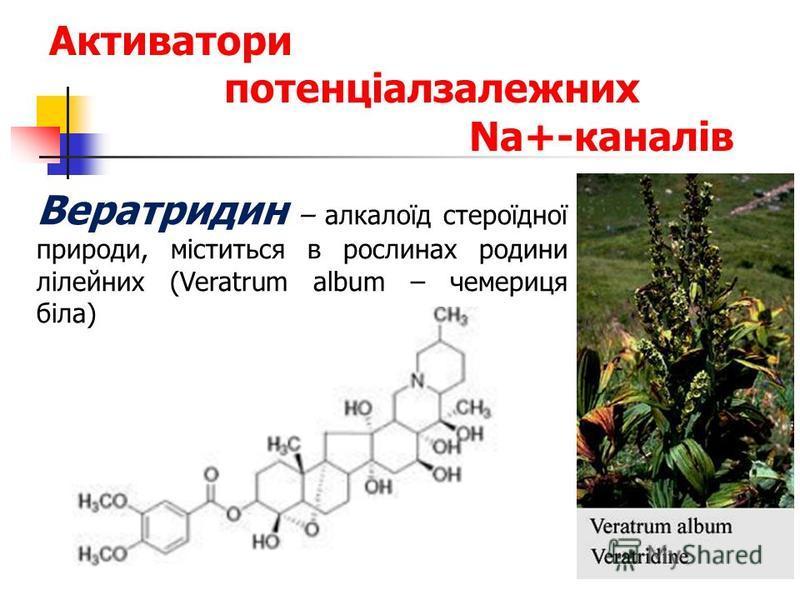 Активатори потенціалзалежних Na+-каналів Вератридин – алкалоїд стероїдної природи, міститься в рослинах родини лілейних (Veratrum album – чемериця біла)
