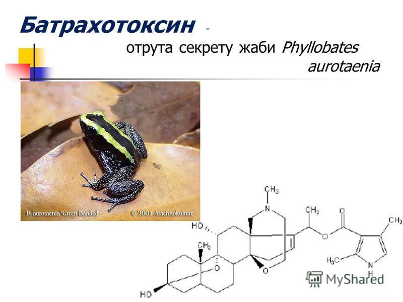 Батрахотоксин - отрута секрету жаби Phyllobates аurotaenia