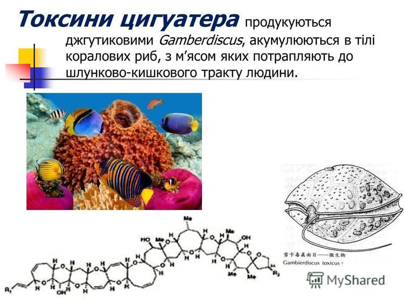Токсини цигуатера продукуються джгутиковими Gamberdiscus, акумулюються в тілі коралових риб, з мясом яких потрапляють до шлунково-кишкового тракту людини.