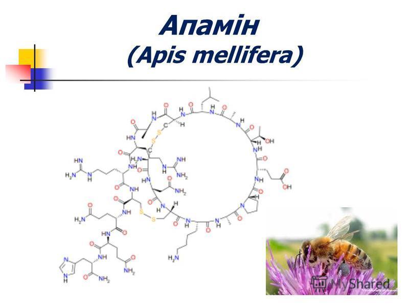 Апамін (Apis mellifera)