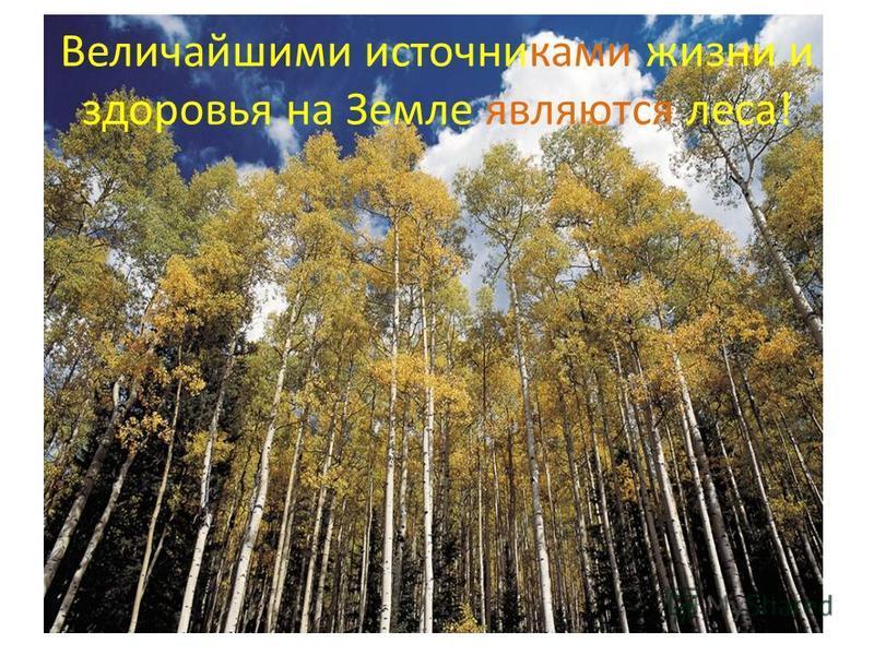 Величайшими источниками жизни и здоровья на Земле являются леса!