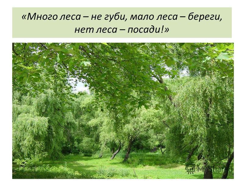 «Много леса – не губи, мало леса – береги, нет леса – посади!»