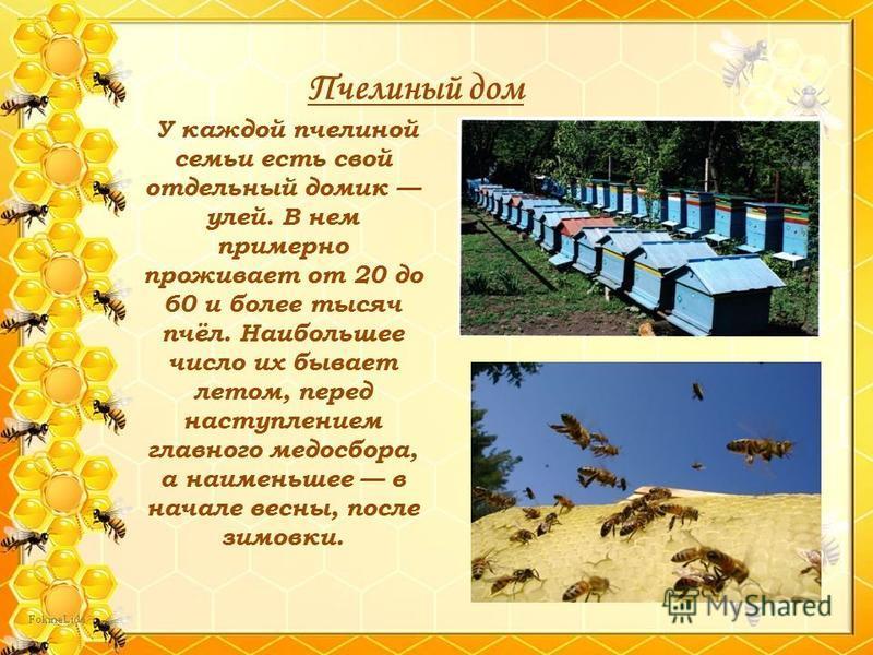 Пчелиный дом У каждой пчелиной семьи есть свой отдельный домик улей. В нем примерно проживает от 20 до 60 и более тысяч пчёл. Наибольшее число их бывает летом, перед наступлением главного медосбора, а наименьшее в начале весны, после зимовки.