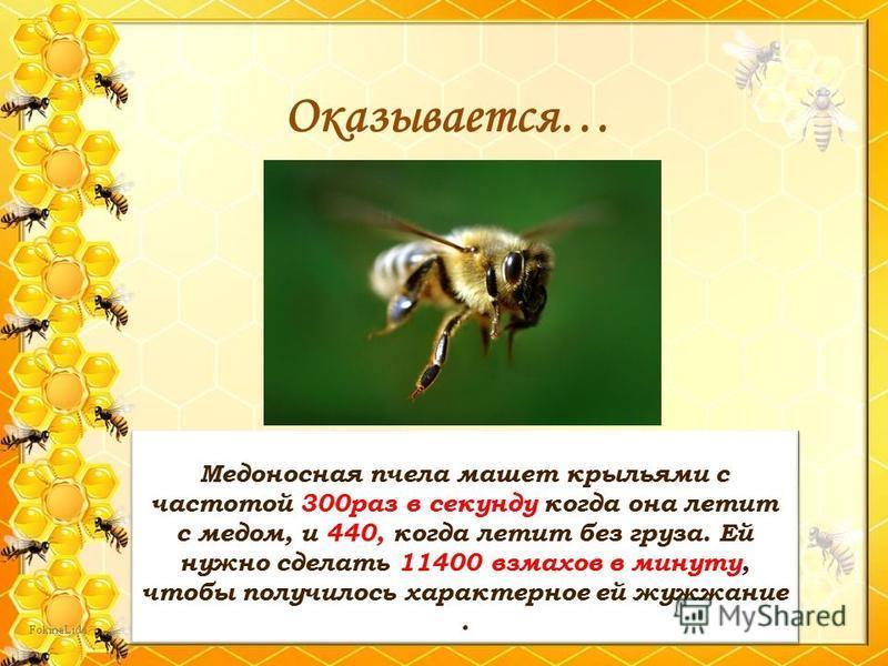 Медоносная пчела машет крыльями с частотой 300 раз в секунду когда она летит с медом, и 440, когда летит без груза. Ей нужно сделать 11400 взмахов в минуту, чтобы получилось характерное ей жужжание. Оказывается…