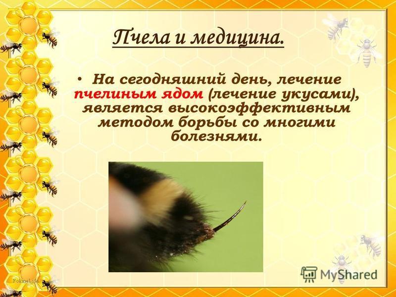 На сегодняшний день, лечение пчелиным ядом (лечение укусами), является высокоэффективным методом борьбы со многими болезнями.