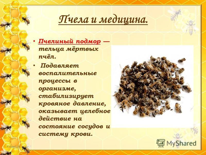 Пчела и медицина. Пчелиный подмор тельца мёртвых пчёл. Подавляет воспалительные процессы в организме, стабилизирует кровяное давление, оказывает целебное действие на состояние сосудов и систему крови.