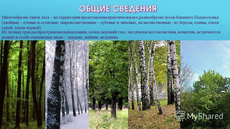 Многообразие типов леса – на территории представлены практически все разнообразие лесов ближнего Подмосковья (хвойные – еловые и сосновые, широколиственные – дубовые и липовые, мелколиственные - из березы, осины, ольхи серой, ольхи черной). Из лесных
