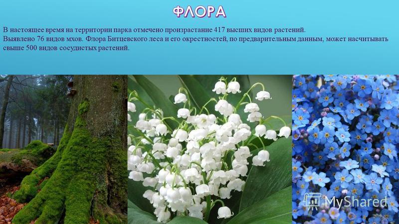 В настоящее время на территории парка отмечено произрастание 417 высших видов растений. Выявлено 76 видов мхов. Флора Битцевского леса и его окрестностей, по предварительным данным, может насчитывать свыше 500 видов сосудистых растений.