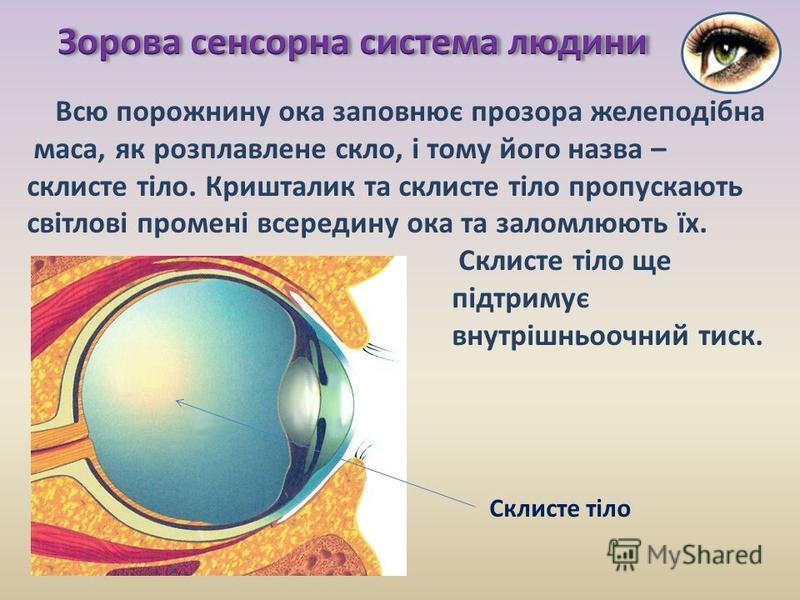 Всю порожнину ока заповнює прозора желеподібна маса, як розплавлене скло, і тому його назва – склисте тіло. Кришталик та склисте тіло пропускають світлові промені всередину ока та заломлюють їх. Склисте тіло ще підтримує внутрішньоочний тиск. Склисте