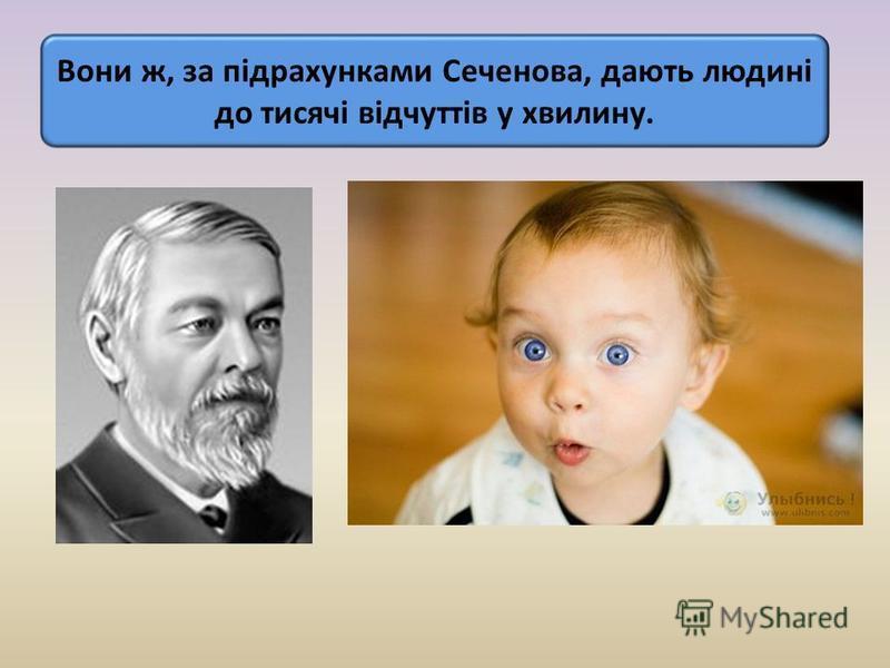 Вони ж, за підрахунками Сеченова, дають людині до тисячі відчуттів у хвилину.