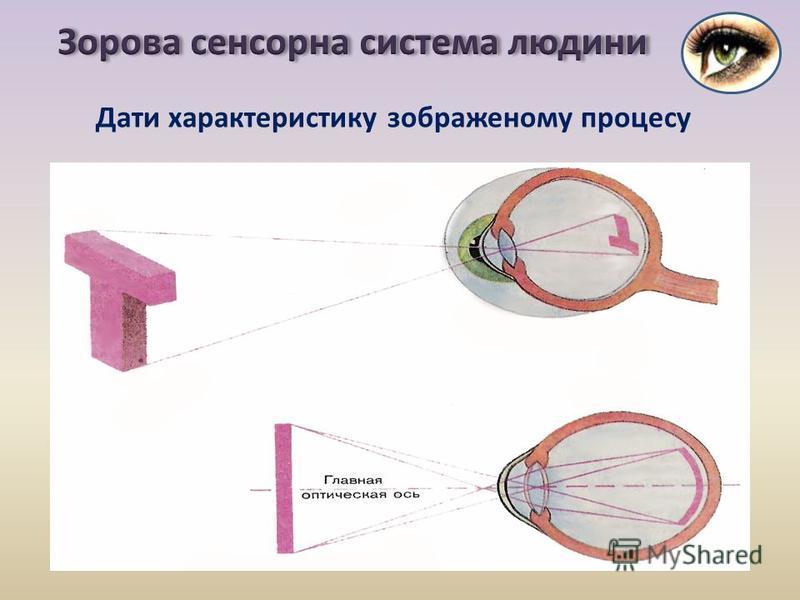 Дати характеристику зображеному процесу