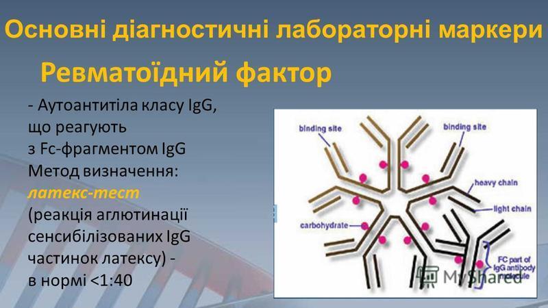 Основні діагностичні лабораторні маркери - Аутоантитіла класу IgG, що реагують з Fc-фрагментом IgG Метод визначення: латекс-тест (реакція аглютинації сенсибілізованих IgG частинок латексу) - в нормі <1:40 Ревматоїдний фактор
