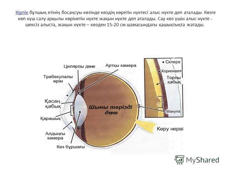 Кірпік бұлшық етінің босаңсуы көзінде көздің көретін нүктесі алыс нүкте деп аталады. Көзге көп күш салу арқылы көрінетін нүкте жақын нүкте деп аталады. Сау көз үшін алыс нүкте - шексіз алыста, жақын нүкте – көзден 15-20 см шамасындағы қашықтықта жата