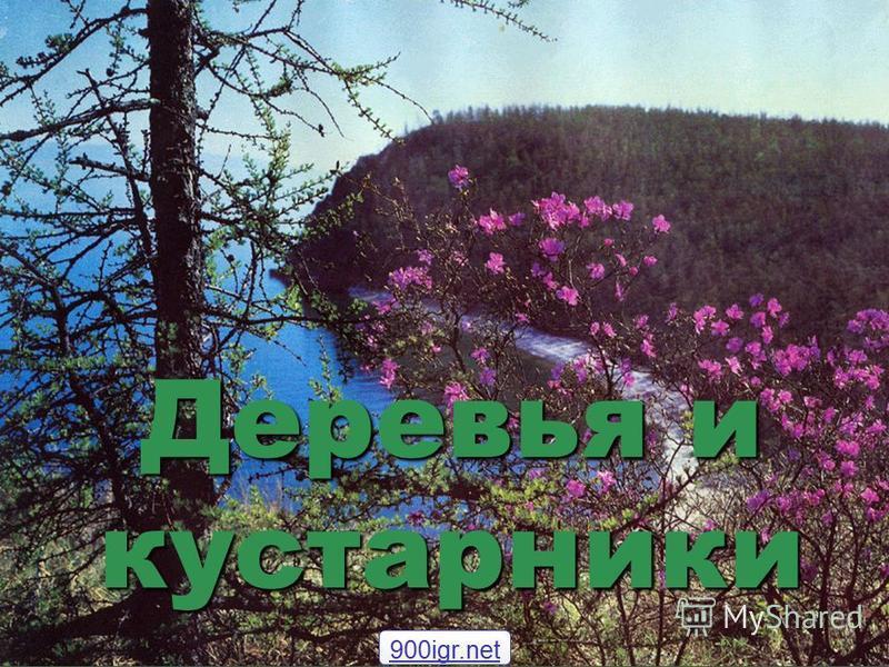 Деревья и кустарники 900igr.net