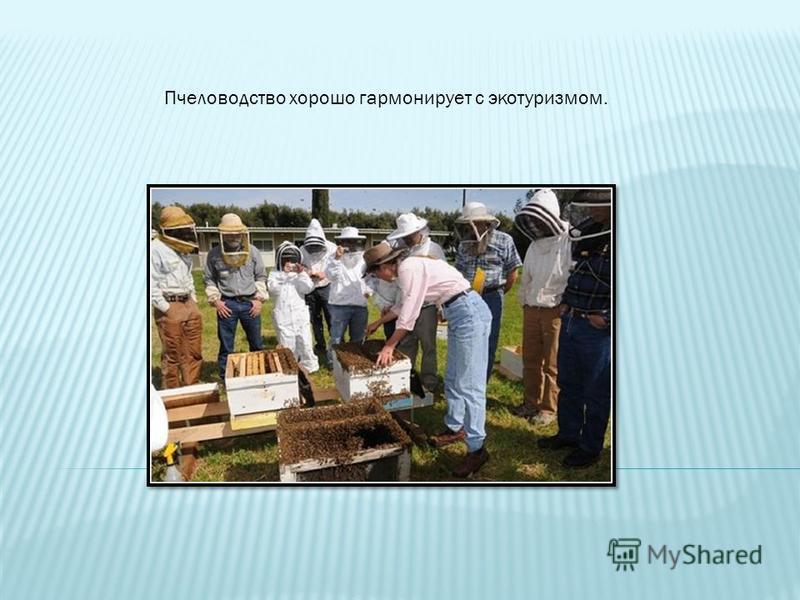 Пчеловодство хорошо гармонирует с экотуризмом.