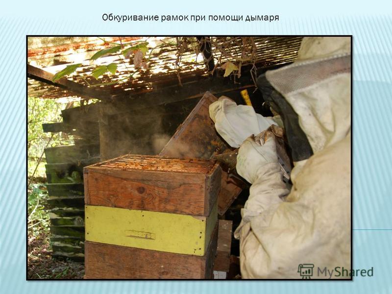 Обкуривание рамок при помощи дымаря